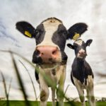 Milchproduktion